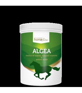 Horseline PRO Algea